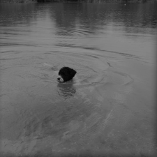 Linda Perotti Dogsurvival 2